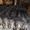 Покрывала из меха меховые пледы эксклюзивные подарки #22197