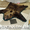 Ковры из шкур медведя волка рыси тигра и др животных #22191