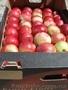 зимние сорта яблок!