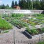 Грядки для органического земледелия. - Изображение #5, Объявление #738147
