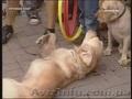 Шоу дрессированых собак Донецк и область.