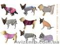 Вяжу одежду животным на заказ