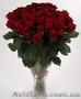 Розы 101 роза цветы низкие цены