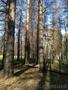 Покупка леса на выгодных условиях для обеих сторон