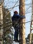 валка,  распиливание,  вывоз деревьев в Донецкой области и