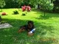 Отдых на уютной даче в деревне Студенок  и 2 ком.квартира в центре Свя - Изображение #8, Объявление #599758