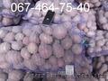 ФХ продает картофель оптом от 20 тонн. В наличии 200 тонн. Спеши.