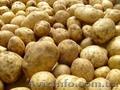 Продам картофель от производителя,  возможен экспорт,  800тонн. Звони!