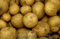 Продам картофель цена от 1.5,  до субботы!