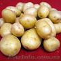 Продам картофель из песка,  доставка по всей Украине