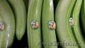 производитель бананов Эквадор - Изображение #3, Объявление #481445